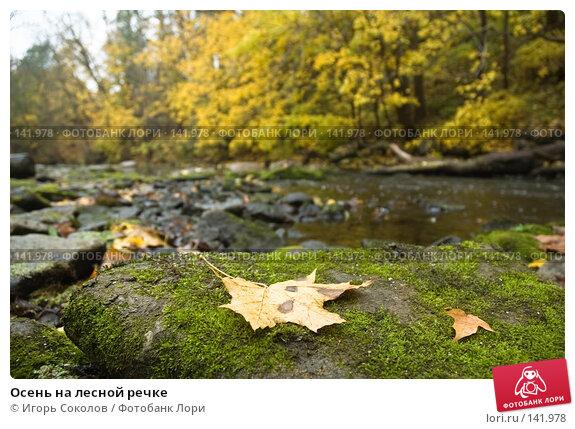 Осень на лесной речке, фото № 141978, снято 18 августа 2017 г. (c) Игорь Соколов / Фотобанк Лори