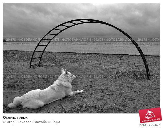 Купить «Осень, пляж», фото № 29678, снято 27 апреля 2018 г. (c) Игорь Соколов / Фотобанк Лори
