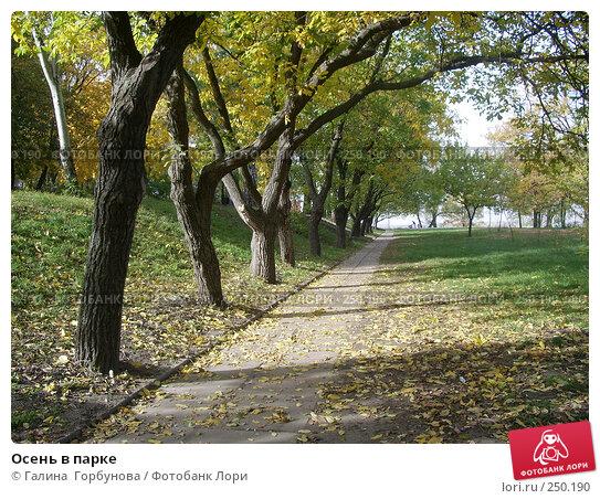 Купить «Осень в парке», фото № 250190, снято 21 октября 2006 г. (c) Галина  Горбунова / Фотобанк Лори
