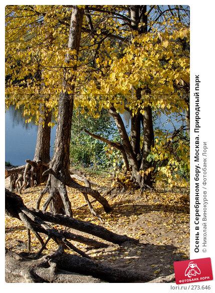 Осень в Серебряном бору. Москва. Природный парк, эксклюзивное фото № 273646, снято 30 сентября 2007 г. (c) Николай Винокуров / Фотобанк Лори