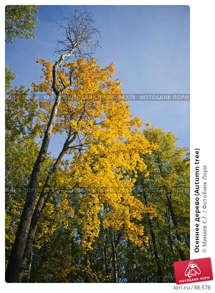 Осеннее дерево (Autumn tree), фото № 88578, снято 22 сентября 2007 г. (c) Минаев С.Г. / Фотобанк Лори