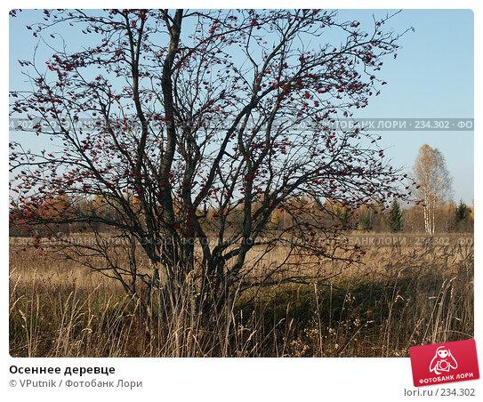 Осеннее деревце, фото № 234302, снято 12 октября 2005 г. (c) VPutnik / Фотобанк Лори
