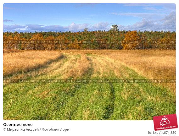 Купить «Осеннее поле», фото № 1674330, снято 23 сентября 2008 г. (c) Мирзоянц Андрей / Фотобанк Лори