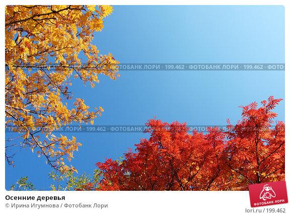 Осенние деревья, фото № 199462, снято 7 октября 2007 г. (c) Ирина Игумнова / Фотобанк Лори