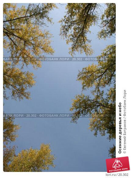 Осенние деревья и небо, фото № 20302, снято 23 сентября 2006 г. (c) Евгений Батраков / Фотобанк Лори