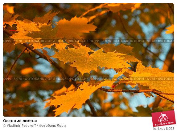 Купить «Осенние листья», фото № 8078, снято 22 марта 2018 г. (c) Vladimir Fedoroff / Фотобанк Лори