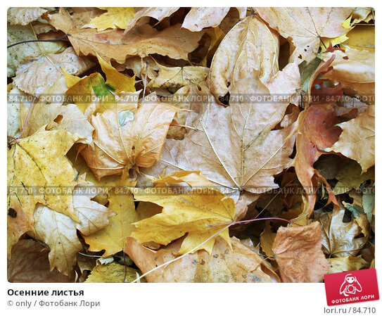 Осенние листья, фото № 84710, снято 10 ноября 2005 г. (c) only / Фотобанк Лори