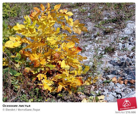 Осенние листья, фото № 216666, снято 23 мая 2017 г. (c) ElenArt / Фотобанк Лори