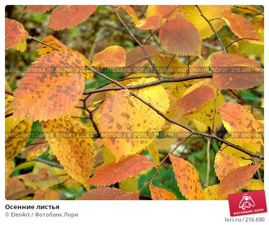 Купить «Осенние листья», фото № 216690, снято 23 марта 2018 г. (c) ElenArt / Фотобанк Лори