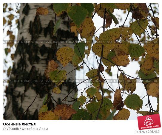 Осенние листья, фото № 226462, снято 9 октября 2006 г. (c) VPutnik / Фотобанк Лори