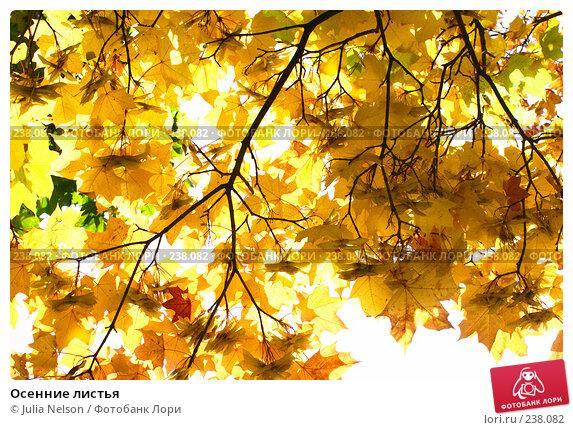 Осенние листья, фото № 238082, снято 23 сентября 2007 г. (c) Julia Nelson / Фотобанк Лори