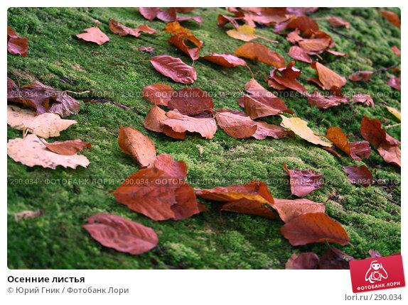 Осенние листья, фото № 290034, снято 26 октября 2007 г. (c) Юрий Гник / Фотобанк Лори