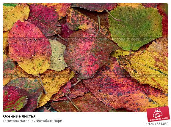 Осенние листья, фото № 334050, снято 3 октября 2007 г. (c) Литова Наталья / Фотобанк Лори