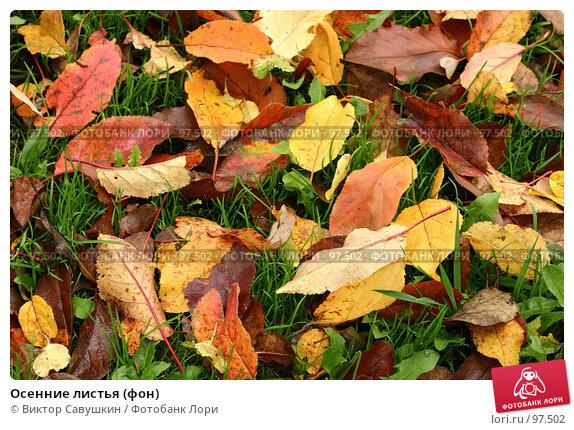 Осенние листья (фон), фото № 97502, снято 30 мая 2017 г. (c) Виктор Савушкин / Фотобанк Лори
