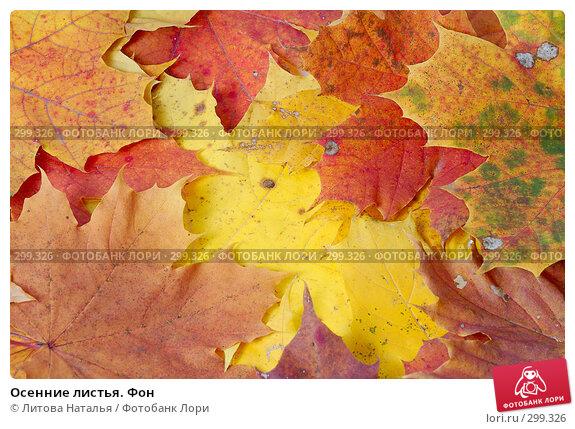 Осенние листья. Фон, фото № 299326, снято 5 октября 2007 г. (c) Литова Наталья / Фотобанк Лори