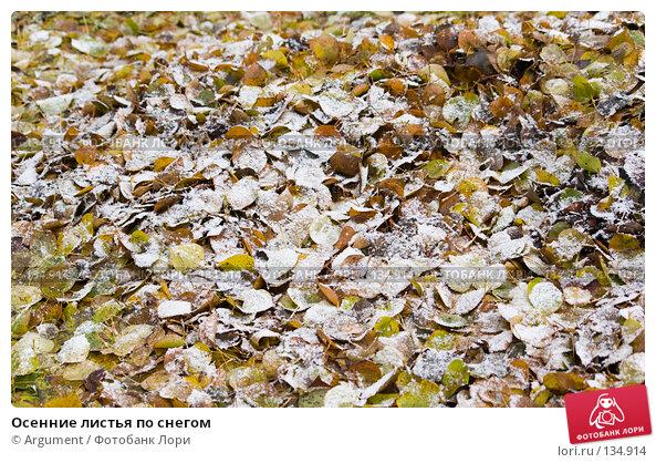 Осенние листья по снегом, фото № 134914, снято 2 ноября 2006 г. (c) Argument / Фотобанк Лори