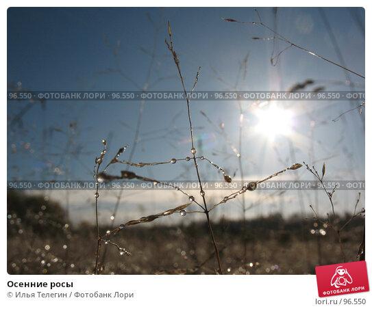 Купить «Осенние росы», фото № 96550, снято 2 октября 2007 г. (c) Илья Телегин / Фотобанк Лори