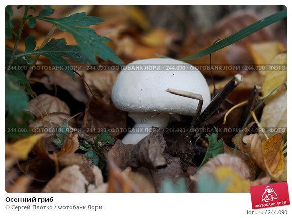 Осенний гриб, фото № 244090, снято 30 сентября 2007 г. (c) Сергей Плотко / Фотобанк Лори