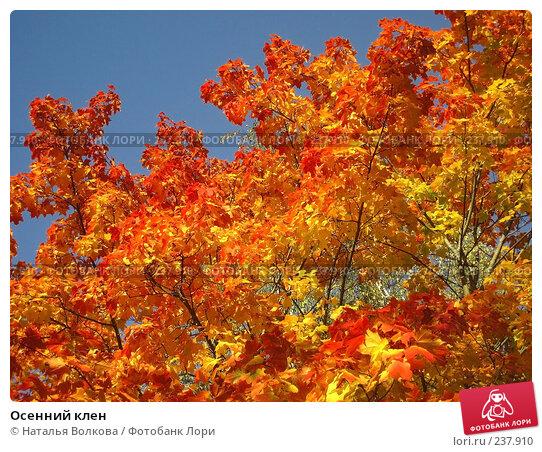 Осенний клен, эксклюзивное фото № 237910, снято 22 сентября 2007 г. (c) Наталья Волкова / Фотобанк Лори