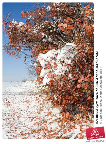Купить «Осенний куст, засыпанный первым снегом», фото № 99606, снято 5 ноября 2006 г. (c) Солодовникова Елена / Фотобанк Лори