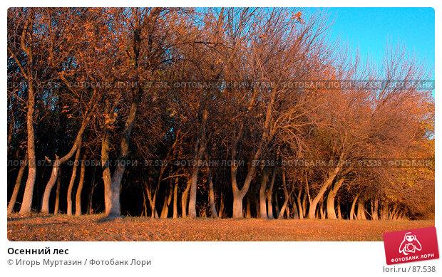 Осенний лес, фото № 87538, снято 1 января 2004 г. (c) Игорь Муртазин / Фотобанк Лори