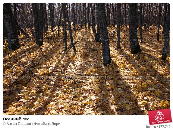 Купить «Осенний лес», фото № 177742, снято 23 апреля 2018 г. (c) Антон Тарасов / Фотобанк Лори