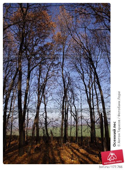 Осенний лес, фото № 177766, снято 26 мая 2017 г. (c) Антон Тарасов / Фотобанк Лори