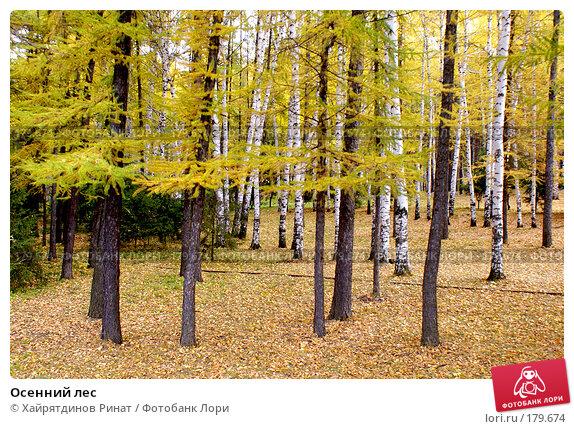 Купить «Осенний лес», фото № 179674, снято 8 октября 2007 г. (c) Хайрятдинов Ринат / Фотобанк Лори