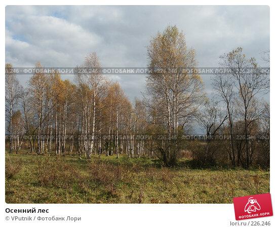Осенний лес, фото № 226246, снято 8 октября 2005 г. (c) VPutnik / Фотобанк Лори