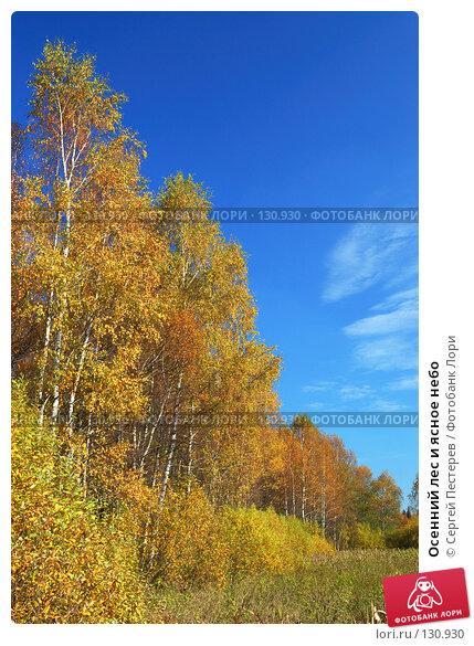 Осенний лес и ясное небо, фото № 130930, снято 29 сентября 2007 г. (c) Сергей Пестерев / Фотобанк Лори