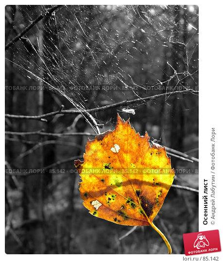 Осенний лист, фото № 85142, снято 5 сентября 2007 г. (c) Андрей Лабутин / Фотобанк Лори