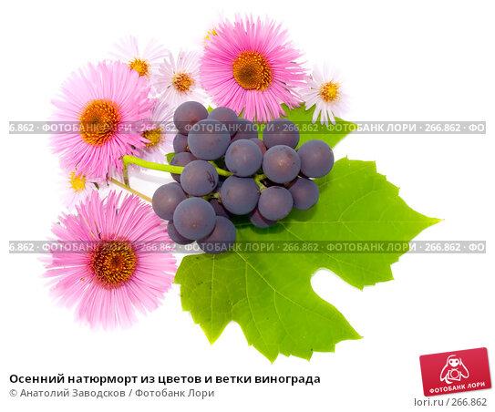Осенний натюрморт из цветов и ветки винограда, фото № 266862, снято 1 октября 2006 г. (c) Анатолий Заводсков / Фотобанк Лори