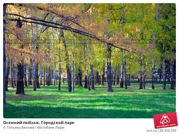 Купить «Осенний пейзаж. Городской парк», фото № 29310310, снято 17 октября 2018 г. (c) Татьяна Белова / Фотобанк Лори