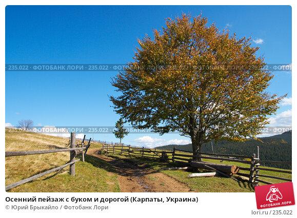 Осенний пейзаж с буком и дорогой (Карпаты, Украина), фото № 235022, снято 29 сентября 2007 г. (c) Юрий Брыкайло / Фотобанк Лори