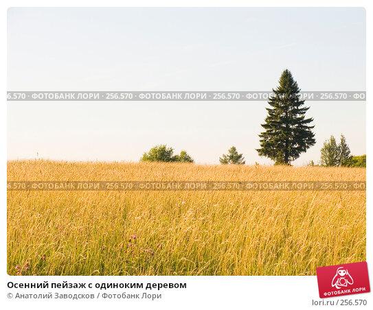 Купить «Осенний пейзаж с одиноким деревом», фото № 256570, снято 1 августа 2006 г. (c) Анатолий Заводсков / Фотобанк Лори