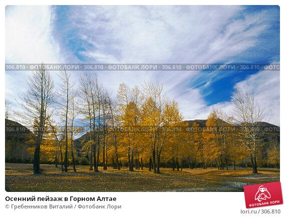 Купить «Осенний пейзаж в Горном Алтае», фото № 306810, снято 25 марта 2018 г. (c) Гребенников Виталий / Фотобанк Лори
