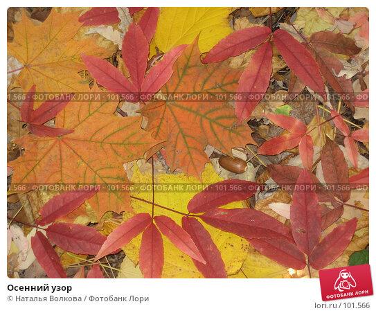 Осенний узор, фото № 101566, снято 26 сентября 2007 г. (c) Наталья Волкова / Фотобанк Лори
