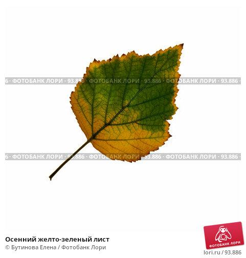 Осенний желто-зеленый лист, фото № 93886, снято 6 октября 2007 г. (c) Бутинова Елена / Фотобанк Лори
