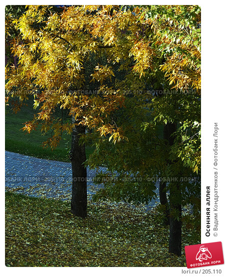 Осенняя аллея, фото № 205110, снято 29 апреля 2017 г. (c) Вадим Кондратенков / Фотобанк Лори