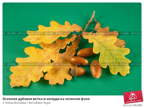 Осенняя дубовая ветка и желуди на зеленом фоне, фото № 93098, снято 4 октября 2007 г. (c) Елена Блохина / Фотобанк Лори