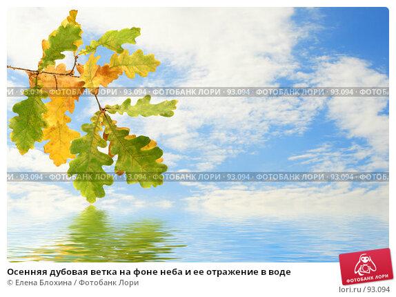 Осенняя дубовая ветка на фоне неба и ее отражение в воде, фото № 93094, снято 22 сентября 2007 г. (c) Елена Блохина / Фотобанк Лори