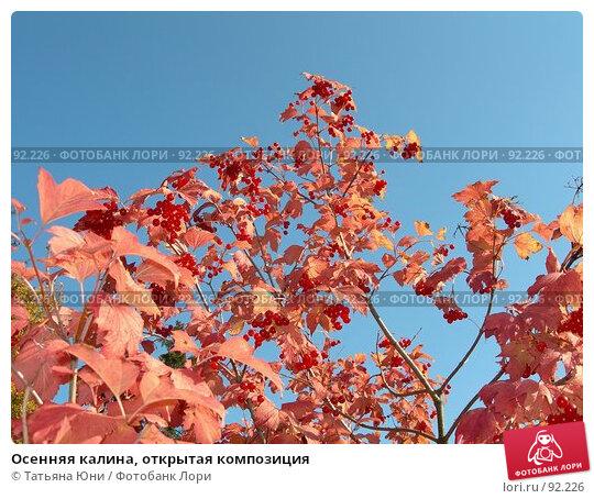 Осенняя калина, открытая композиция, эксклюзивное фото № 92226, снято 30 сентября 2007 г. (c) Татьяна Юни / Фотобанк Лори
