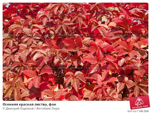 Осенняя красная листва, фон, фото № 146506, снято 20 сентября 2007 г. (c) Дмитрий Ощепков / Фотобанк Лори