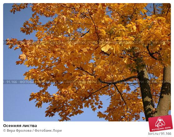 Осенняя листва, фото № 91166, снято 30 сентября 2007 г. (c) Вера Фролова / Фотобанк Лори