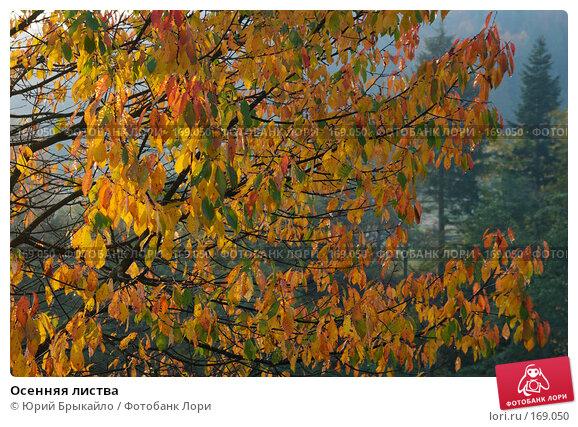 Осенняя листва, фото № 169050, снято 2 октября 2007 г. (c) Юрий Брыкайло / Фотобанк Лори
