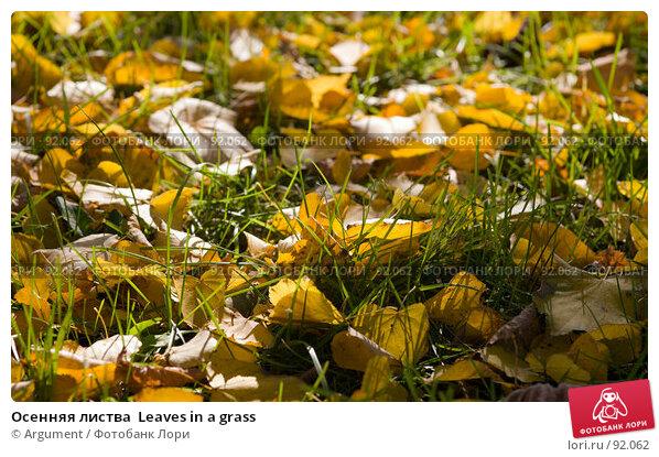 Купить «Осенняя листва  Leaves in a grass», фото № 92062, снято 25 сентября 2007 г. (c) Argument / Фотобанк Лори
