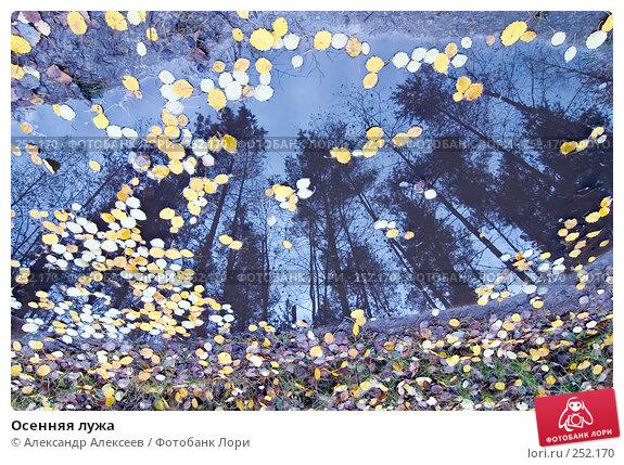 Осенняя лужа, эксклюзивное фото № 252170, снято 20 октября 2007 г. (c) Александр Алексеев / Фотобанк Лори