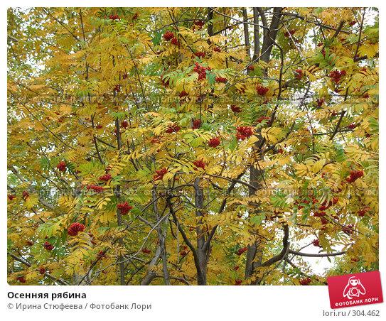 Осенняя рябина, фото № 304462, снято 30 сентября 2007 г. (c) Ирина Стюфеева / Фотобанк Лори