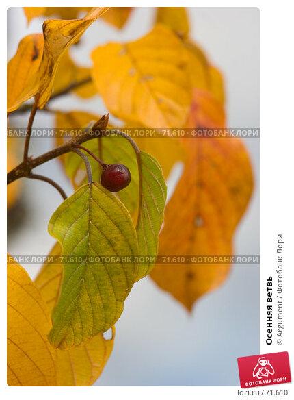 Осенняя ветвь, фото № 71610, снято 6 октября 2006 г. (c) Argument / Фотобанк Лори