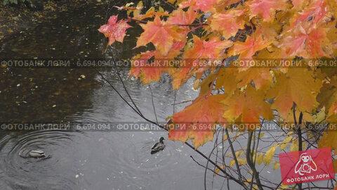 Купить «Осень.Утки в воде.», видеоролик № 6694094, снято 13 ноября 2014 г. (c) Звездочка ясная / Фотобанк Лори